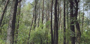 Evergreen Oak será el título del nuevo disco de L.A.
